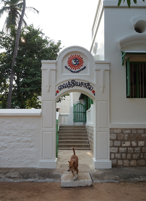 An ashram dog visits the old dispensary