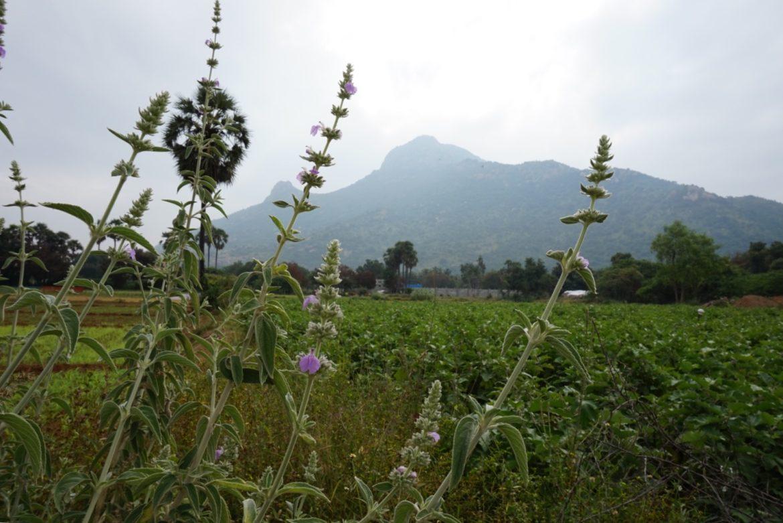 Arunachala from Adi Annamalai
