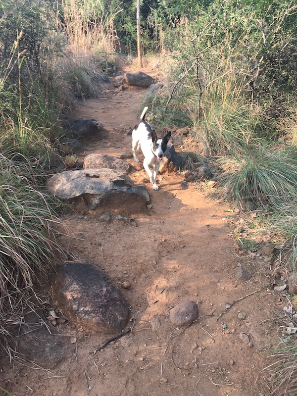 Trail dog