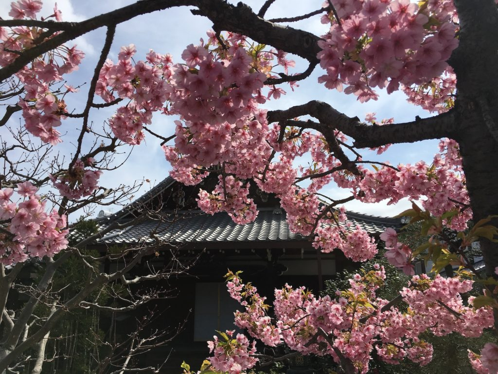 Blossoms at Todai-Ji Temple